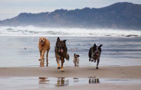 Trois endroits pour promener votre animal dans la région d'Athènes