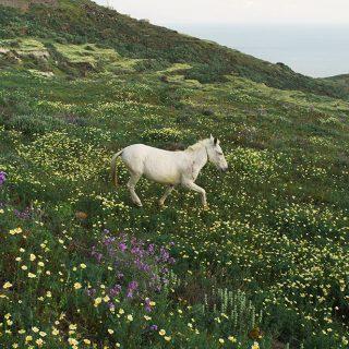 La beauté des fleurs sauvages