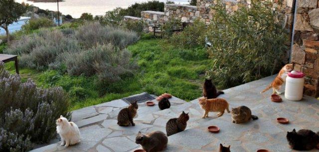 Les boules de poil de Syros bientôt sur Netflix